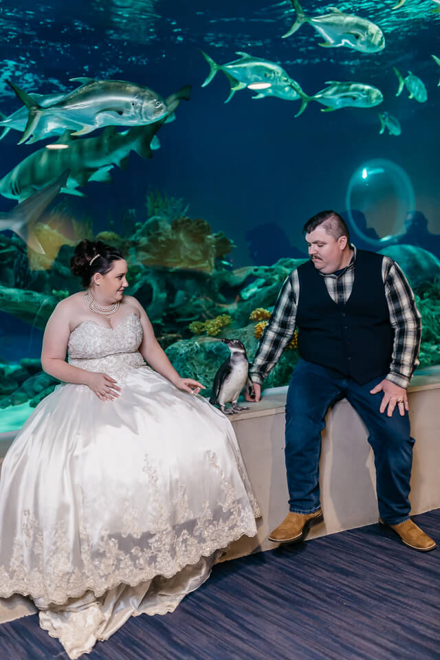 Bride and groom petting a penguin at the OdySea Aquarium.